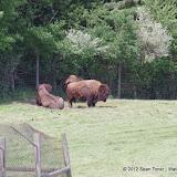 05-11-12 Wildlife Prairie State Park IL - IMGP1559.JPG