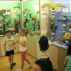Hontza museoa 2015