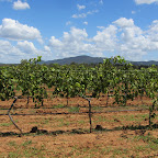 Weintour im Hunter Valley