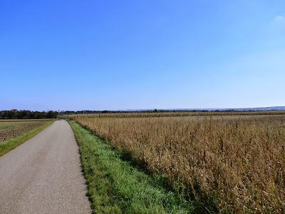 Blick Richtung Seefeld