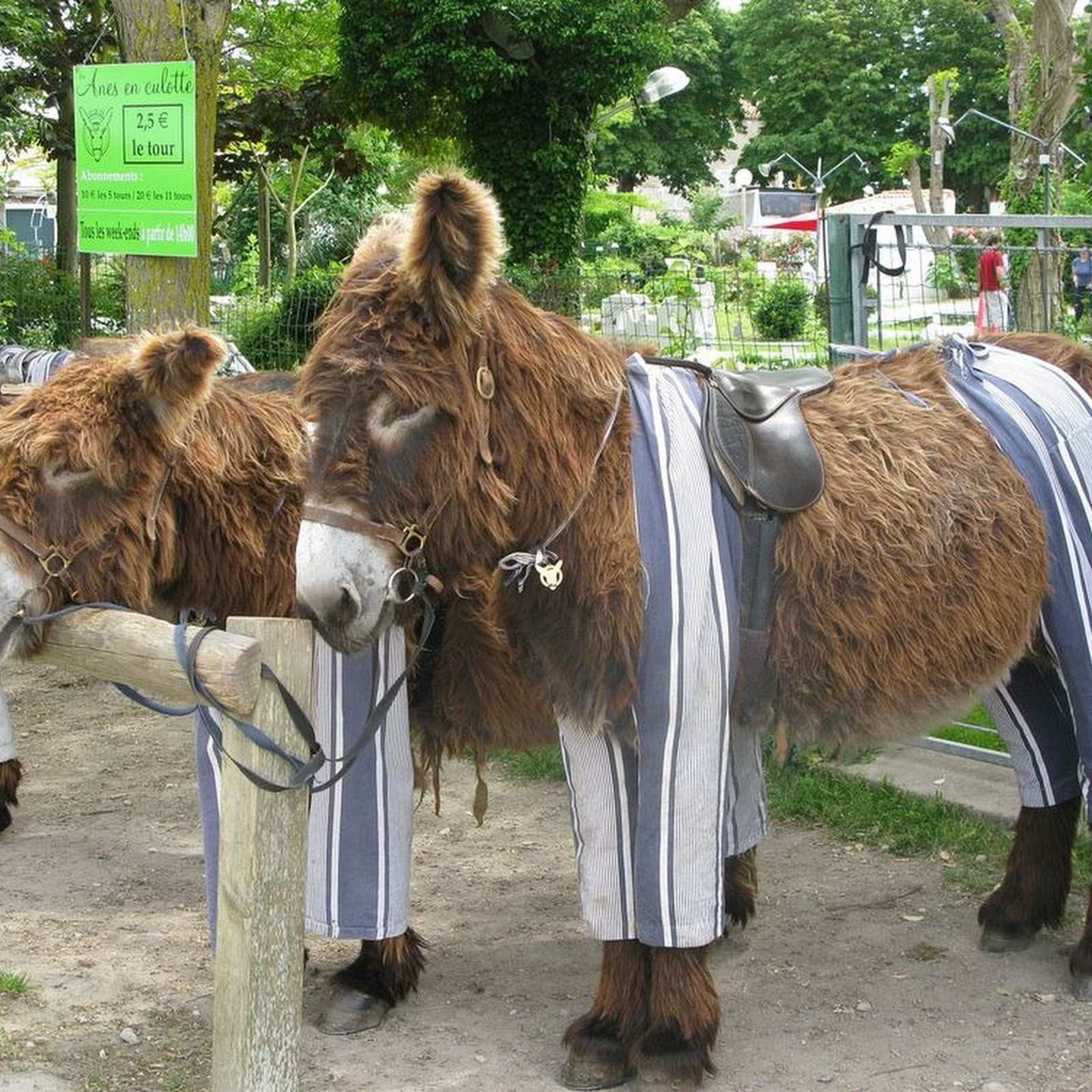 The Island Where Donkeys Wear Pyjamas