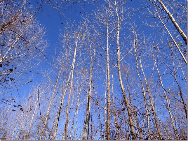 trees2IMG_2809