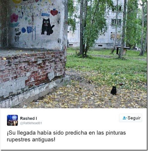 humor twits de gatos (3)