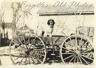 dog on wagon Dl ant