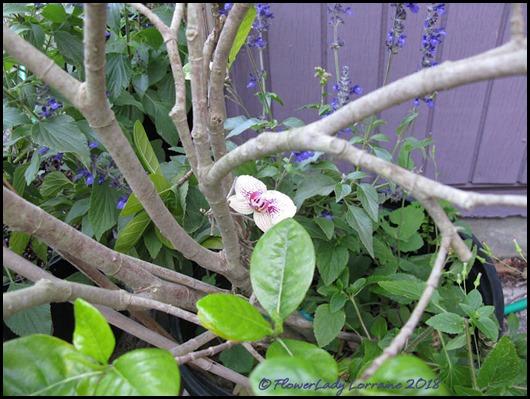 04-19-orchid-surprise