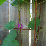 Gardening 2010, Part Three - 101_4286.JPG