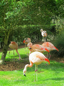 Other animal friends at the Wildlife Safari Village, like Flamingos