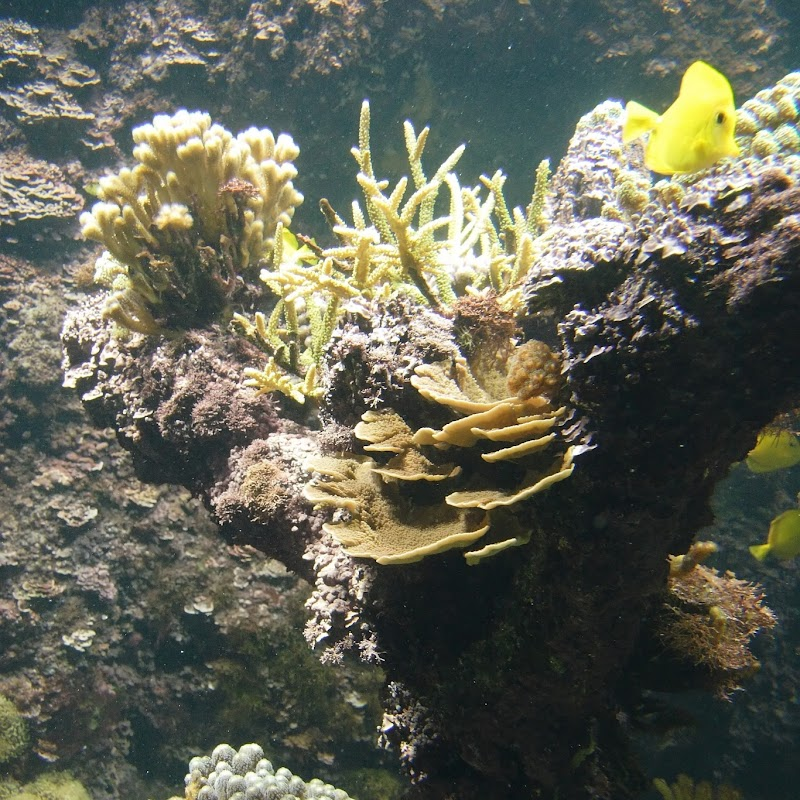 Aquarium_27.jpg