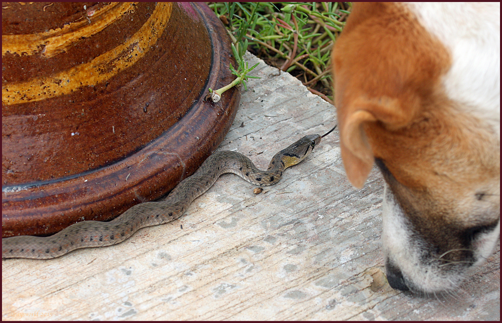 Spot with snake