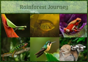 Rainforest Journey_6-Animal-Types