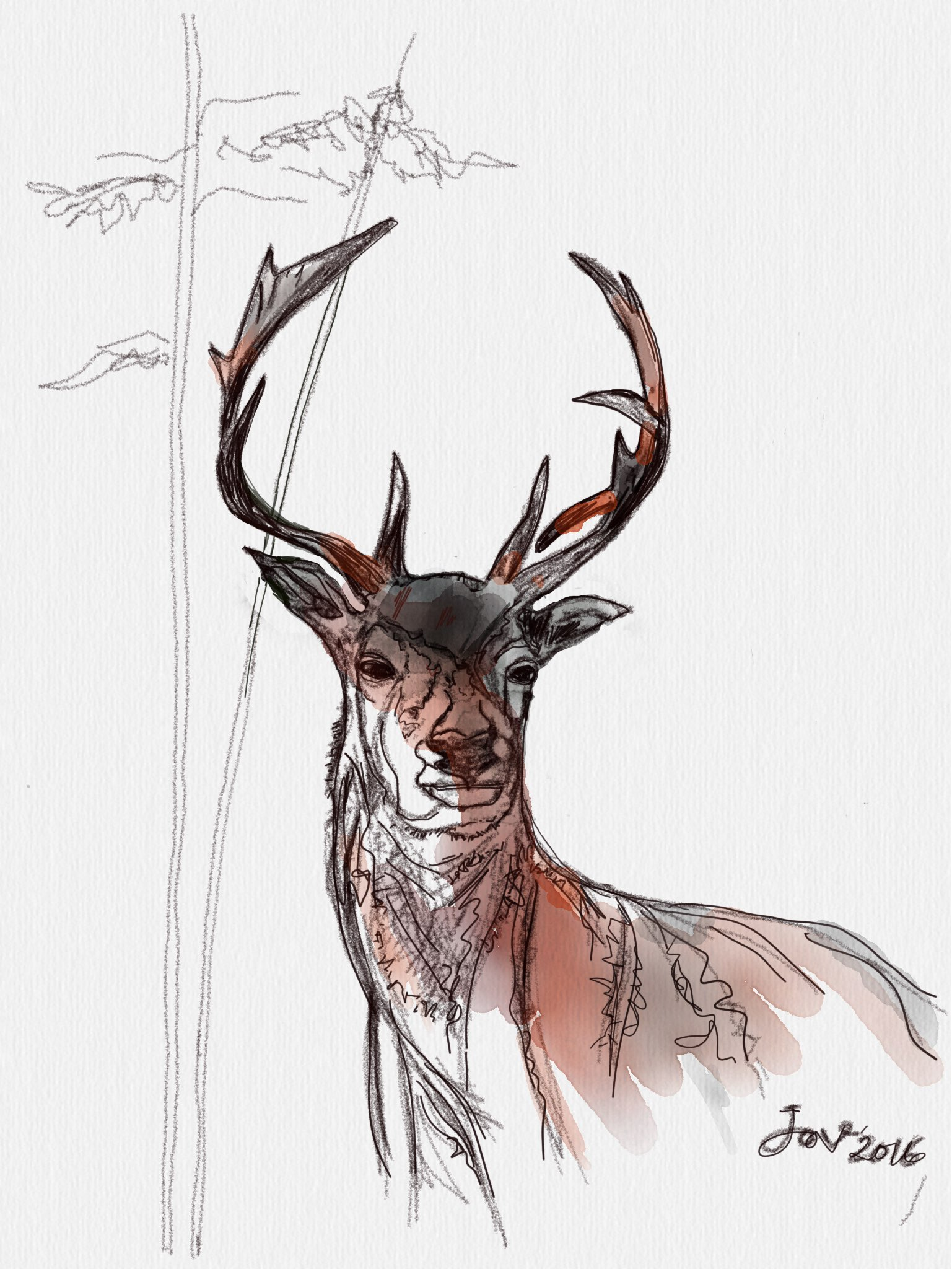 deer made with Sketches