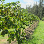 Weintour im Hunter Valley