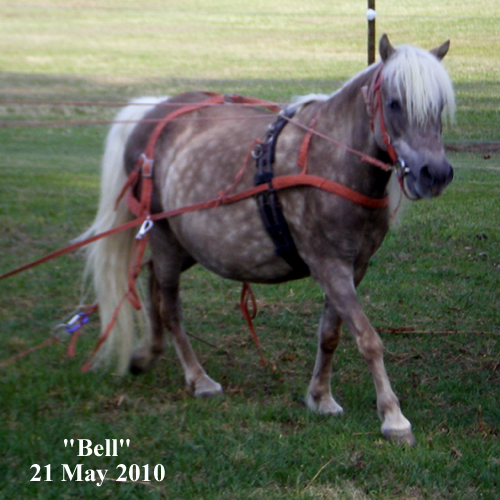 Bell wearing harness braided from recycled hay string