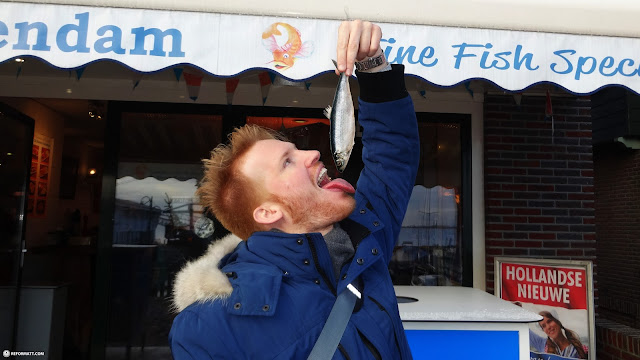 eating RAW herring in Holland in Volendam, Noord Holland, Netherlands