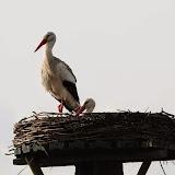 Vogels en dieren - IMG_5844.JPG