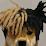 Hamilton's profile photo