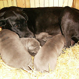 Star & True Blues February 21, 2008 Litter - HPIM0965.JPG