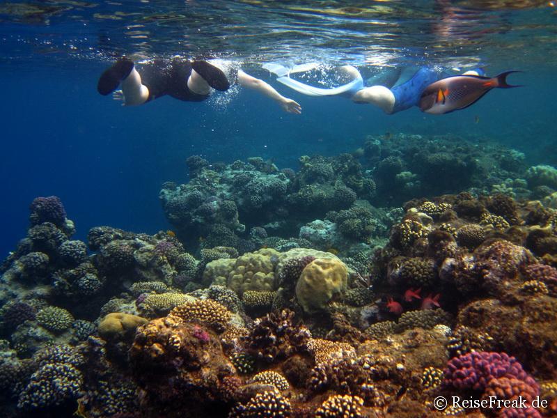 002 Schnorchler Ägypten Dez 2014 - Marsa Alam - Coraya Bay IMG_0260