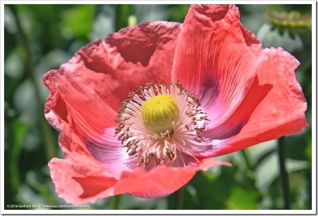 160515_PenceGardenTour_Garden9_004