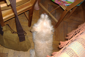 Wrotswog the hostel dog tries to mooch some breakfast