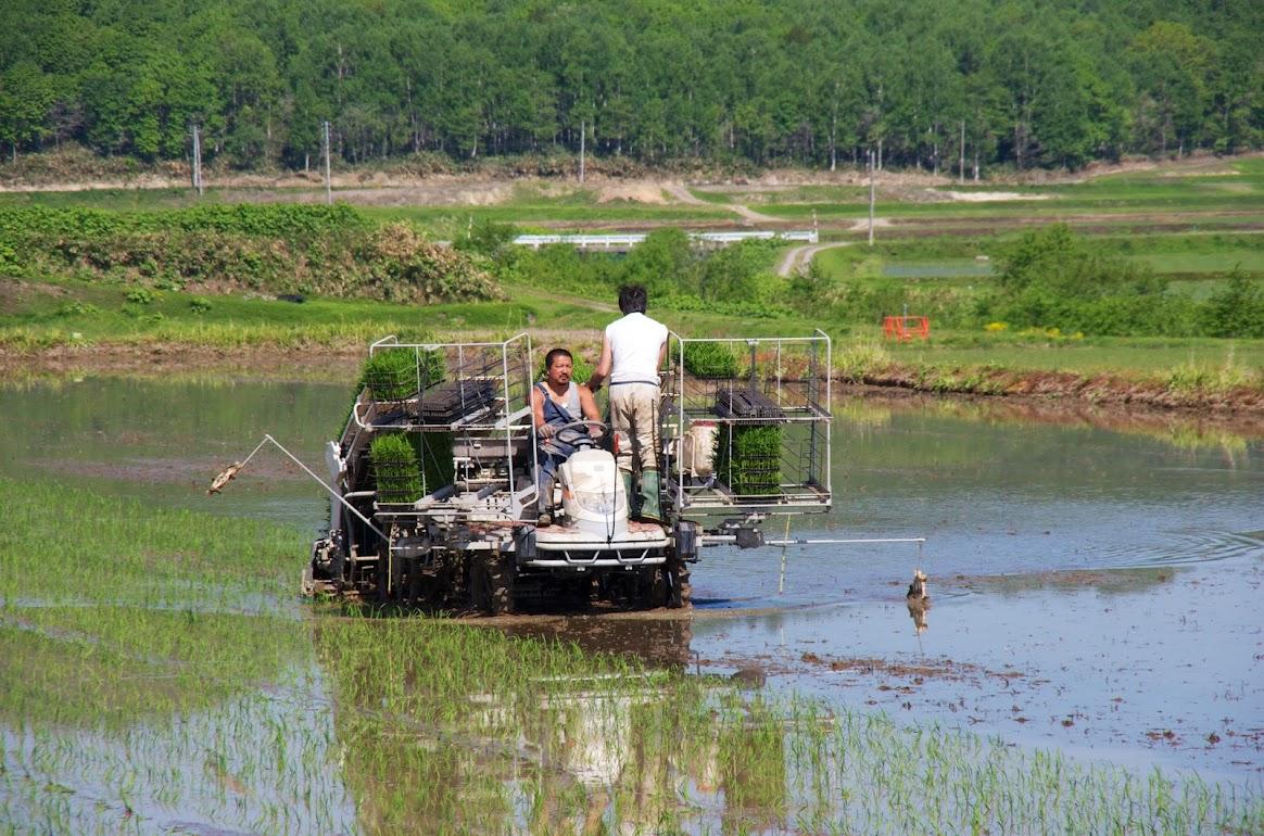 自然米の田植え