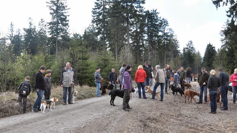 2014-04-13 - Waldführung am kleinen Waldstein (von Uwe Look) - DSC_0392.JPG