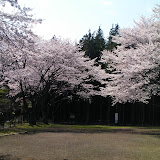 20100403_三保市民の森