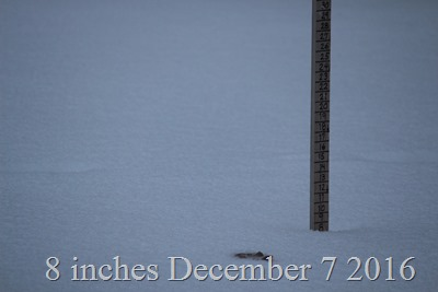 More than eight inches of snow Dec 7