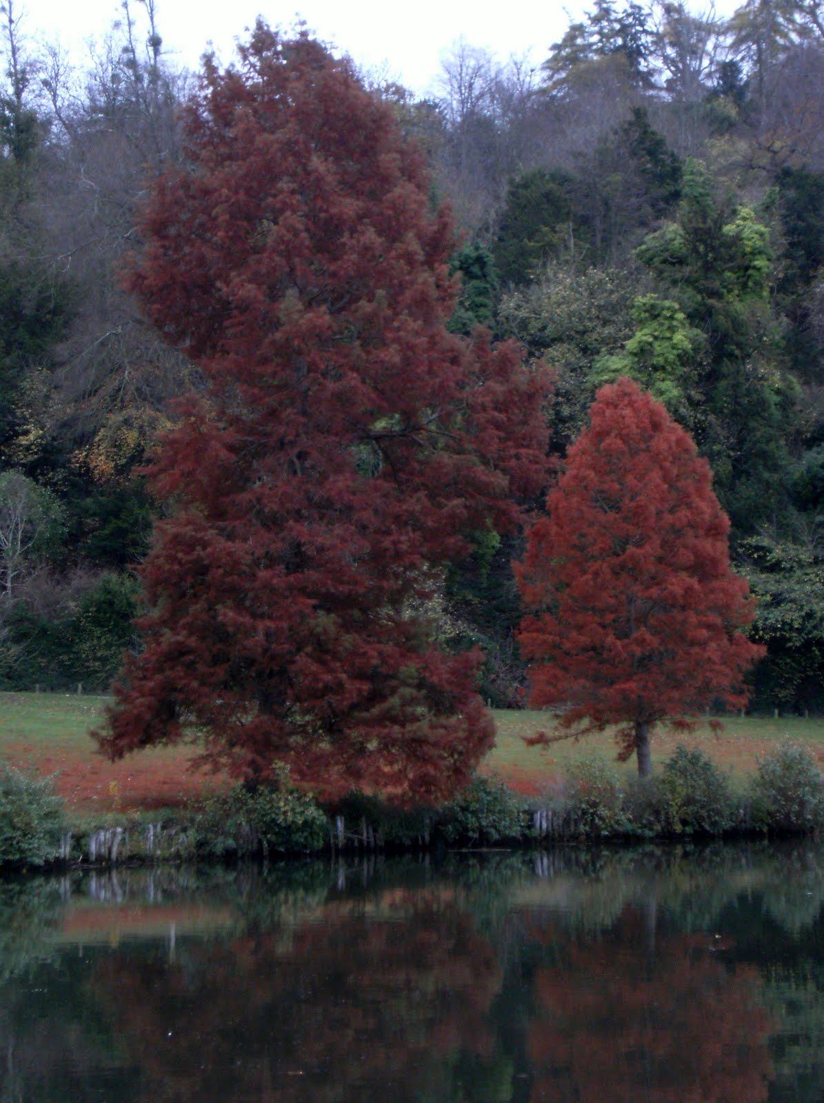 1011130031 Late autumn colours on the Cliveden estate