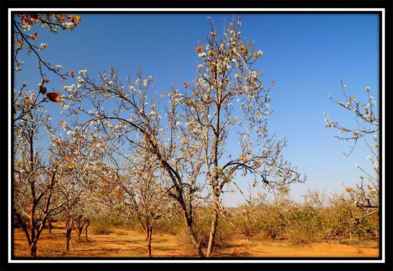 Nashpati Garden - Netarhat