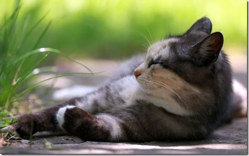 1123cute-cats-wallpapers-background-132