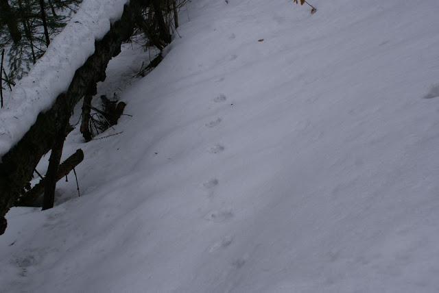 Zajęcia terenowe 29 lutego 2012 - DSC06192_1.JPG