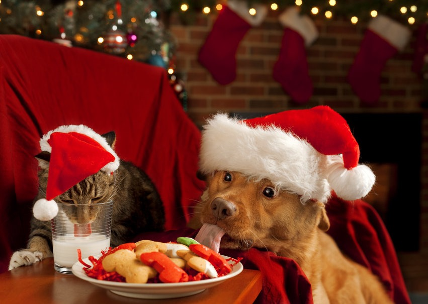 [peligros-de-navidad-para-perros-y-gatos%5B3%5D]