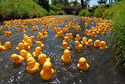 "You must read more about ""Susie the Duck"" in Lodi, WI - click on picture"