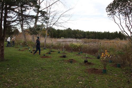Hammo Fall Planting - Jim Murtagh - BC3G2543.jpg
