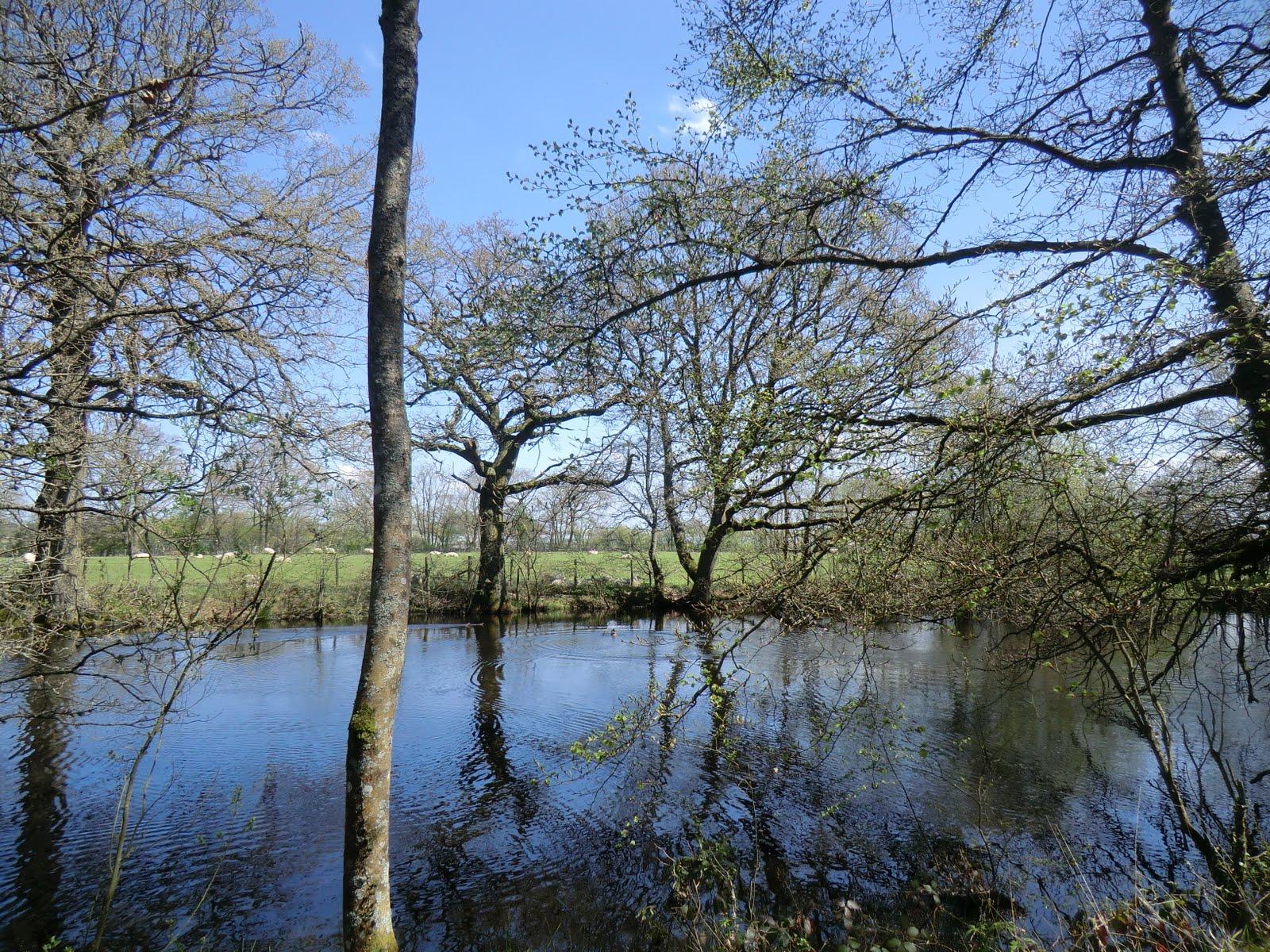 CIMG6334 Pond near Wat Stock