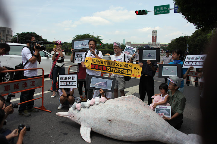 以媽祖魚保育聯盟為首的數個環保團體,要求總統馬英九重視白海豚保育,否則只能到博物館看標本。