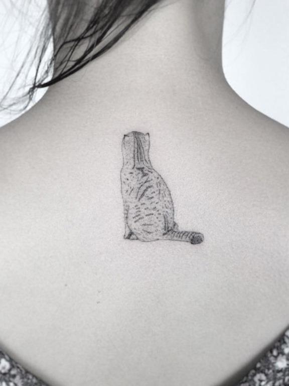 Este gatinho