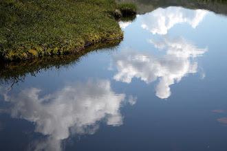 Photo: Болотное озерцо, вода не зеленая, а коричневая.