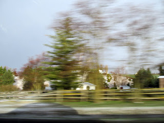 motion blurred picture of trees