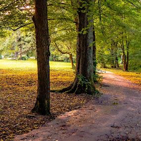 Večer v parku. by Ján Hrmo - City,  Street & Park  City Parks ( chodnik., park, stromy )