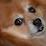 rob shaw's profile photo