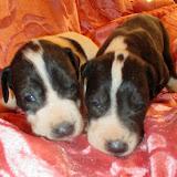 Violet & Ariadne @ 3 weeks
