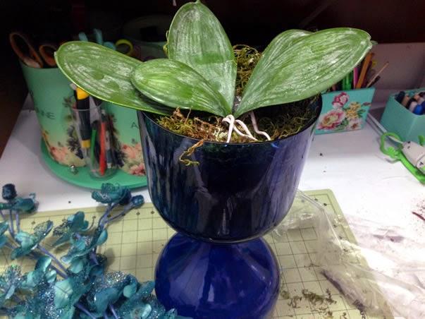 Colocar planta no vaso