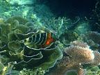 Tioman - keine Ahnung was für ein Fisch
