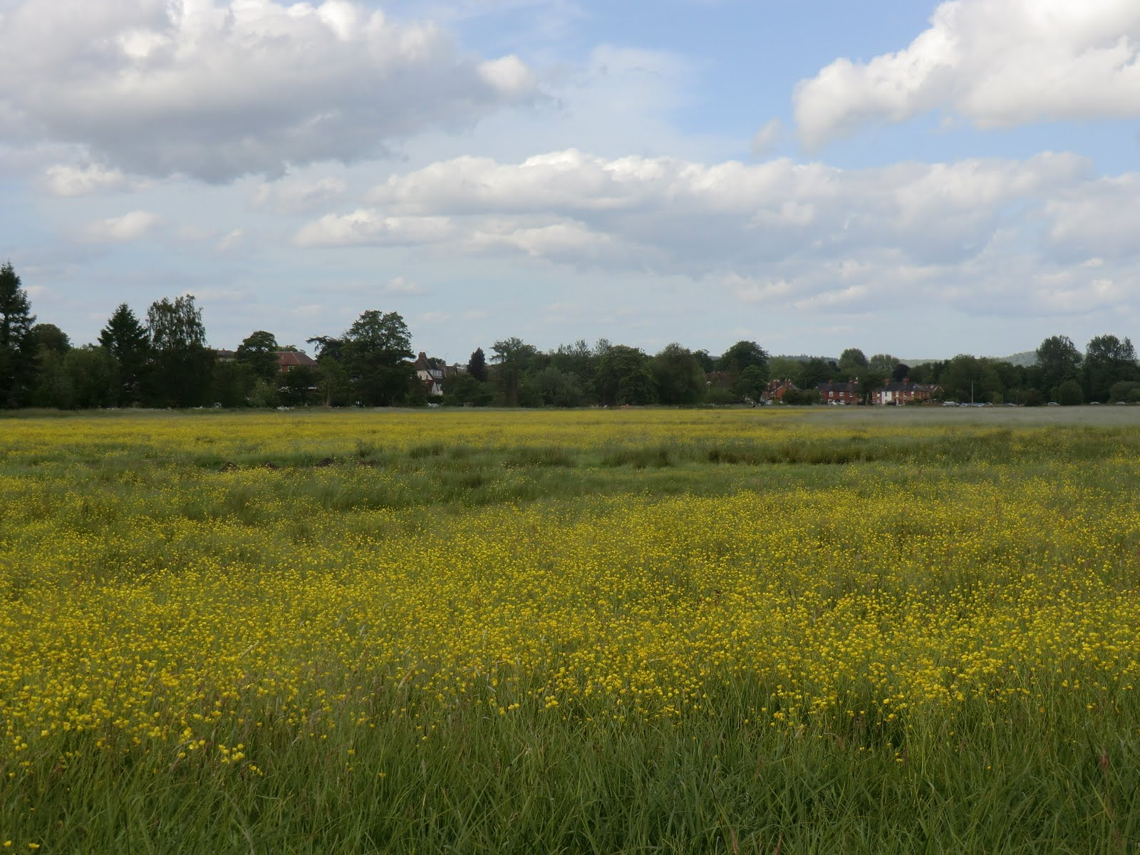 CIMG8425 Water meadows, Godalming