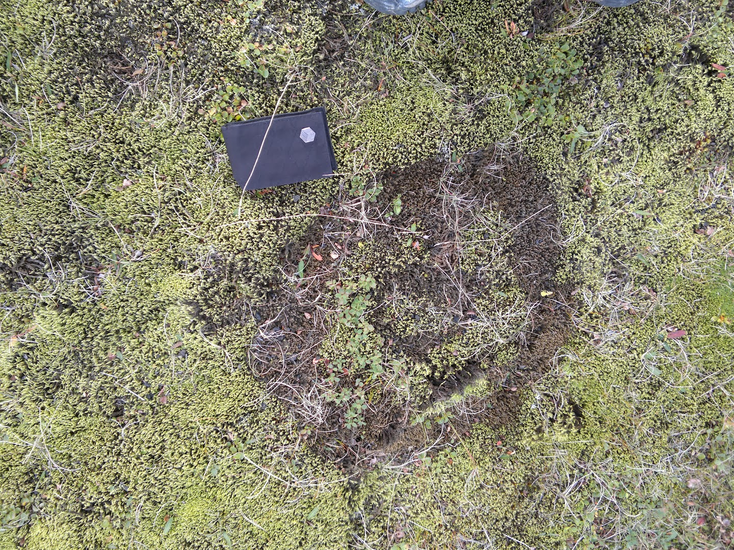 Aliens! Strange circular patterns on moss, no idea how these are born. JJT