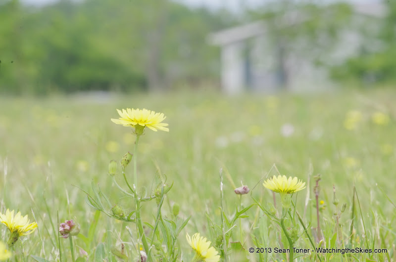 2013 Spring Flora & Fauna - IMGP6376.JPG