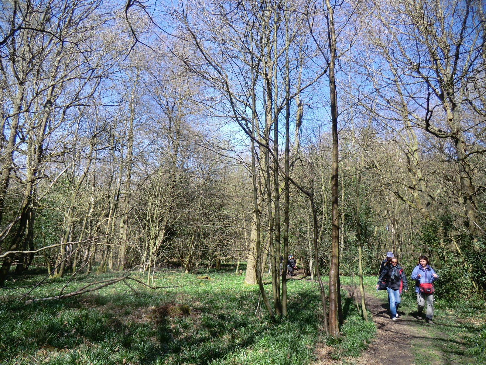 CIMG7596 Ledgers Wood