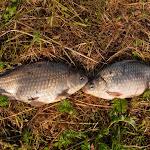 20140524_Fishing_Bronnyky_011.jpg